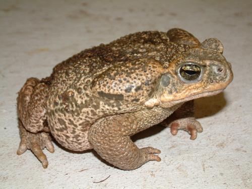 Amphibian. Allegory.